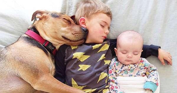 いつも一緒。仲良しな「ふたりと1匹」のお昼寝の姿に世界中が癒やされる  –  grape -「心」に響く動画メディア