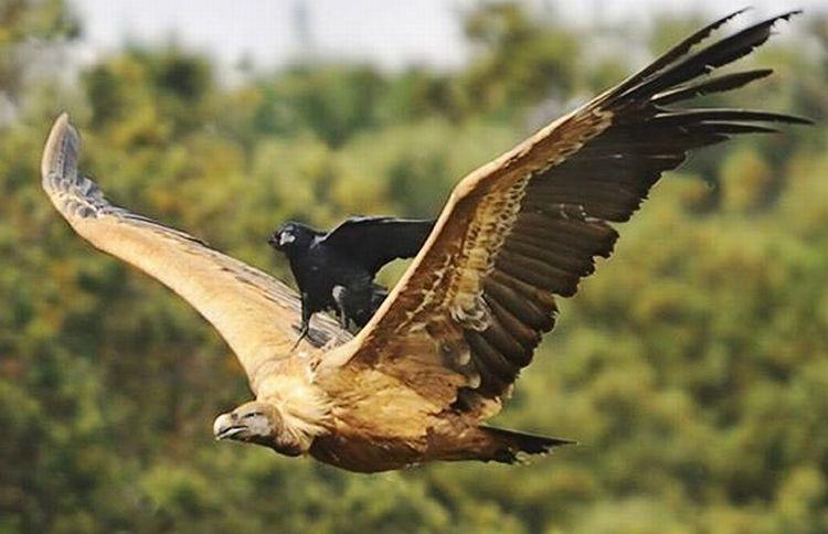 自然界の奇跡!イタチを背中に乗せ空を飛ぶキツツキの写真が撮影される