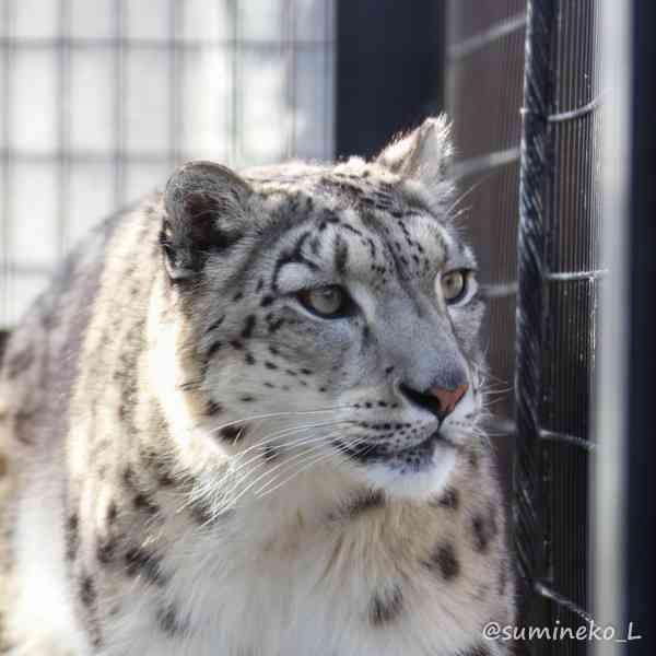 自撮り棒が観光地でトラブルのもとに 動物園の柵に入れる人も