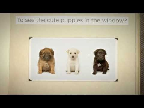 Where Do Pet Store Puppies Come From - YouTube