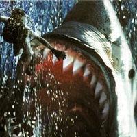 巨大シャーク、メガロドンはまだいる?深海で撮影された巨大ザメ動画UP - NAVER まとめ