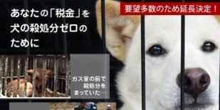 広島県でふるさと納税を使い「犬の殺処分ゼロ」への支援の輪が広がる - IRORIO(イロリオ)