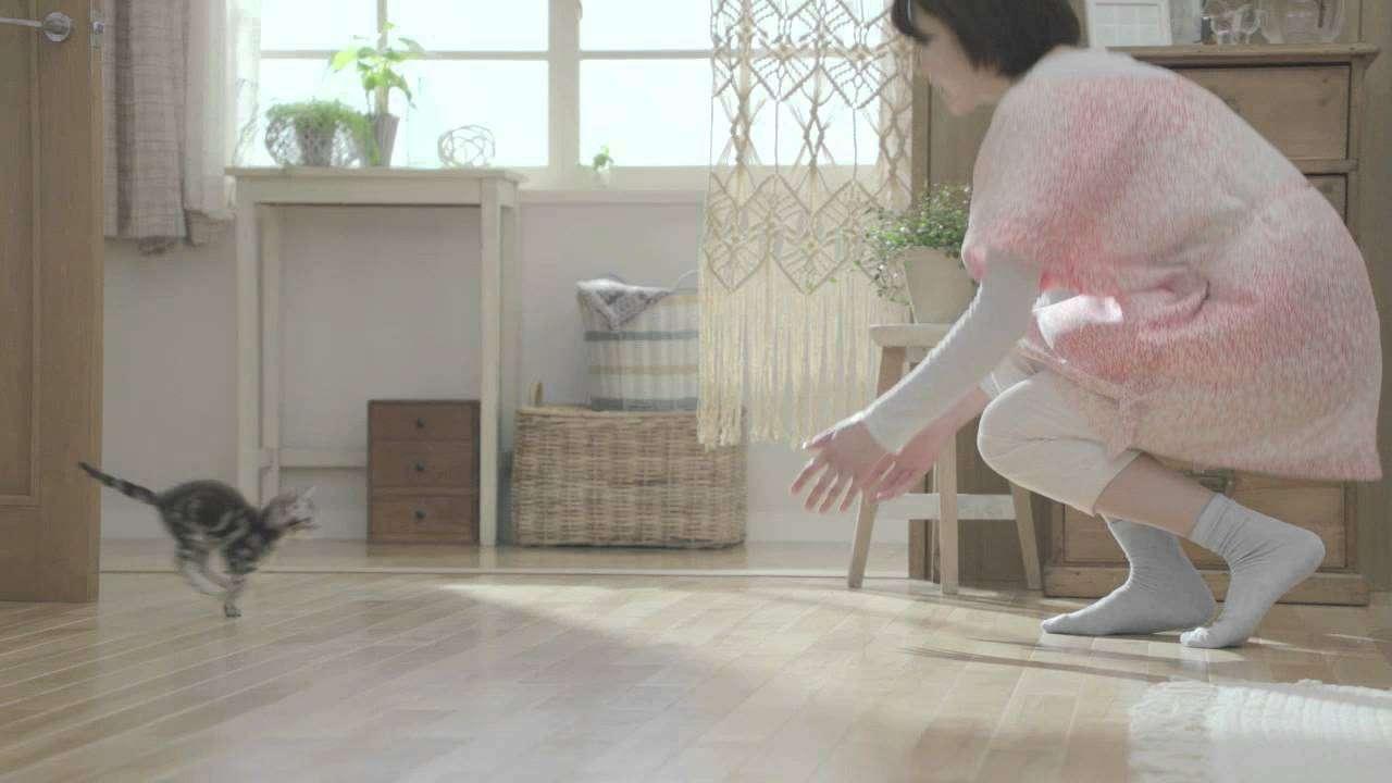 カルカン 子ねこ CM ねこまっしぐら - YouTube
