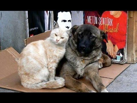 日本では見られない情景(野良猫・野良犬)優しい人々に包まれて・・・ - YouTube