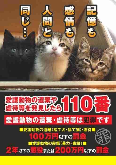 猫5匹を生き埋めにした30代教諭「田舎ではやっていた」