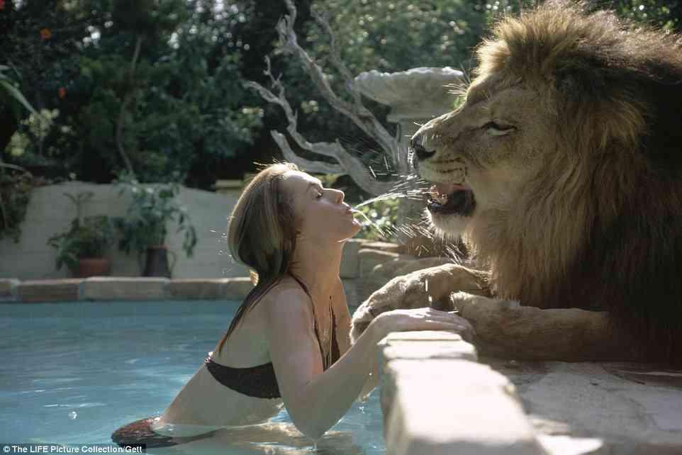 【画像】ライオンをペットにしていた女優一家の生活が凄い!少女とプールで遊び、一緒に眠る