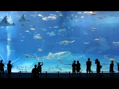 Kuroshio Sea - 2nd largest aquarium tank in the world - (Please Don't Go by Barcelona) - YouTube