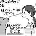 人と犬が見つめ合うと双方に安心ホルモンが増加すると判明