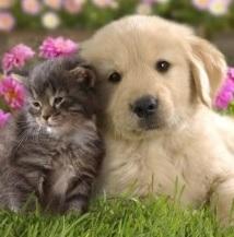 犬も猫好き!犬派、猫派無い人集まれー