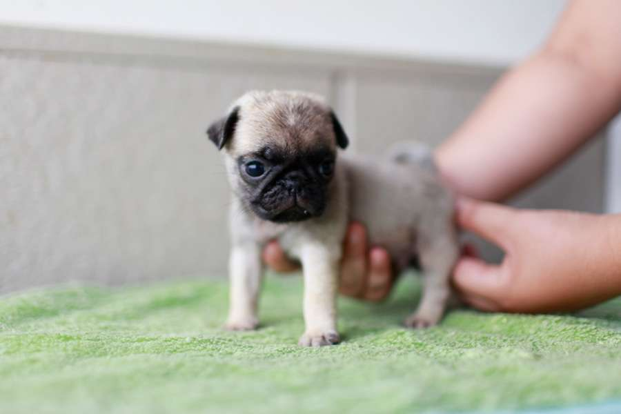 あなたの愛犬の犬種は何ですか?なぜその犬種にしましたか?