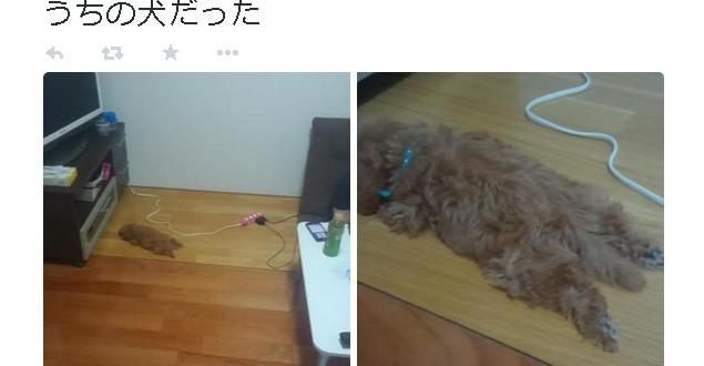 生後三か月の愛犬が家の中から忽然と消える→発見時の姿に皆がほっこり | おたくま経済新聞