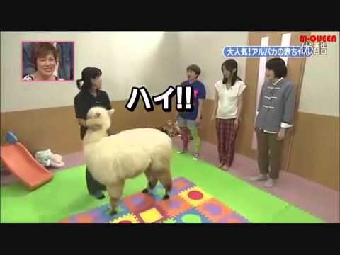 志村どうぶつ園 動物の赤ちゃん 堀北真希 - YouTube