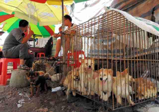 中国の犬肉祭、世界が批判 地元緊張「なぜ犬はだめ?」