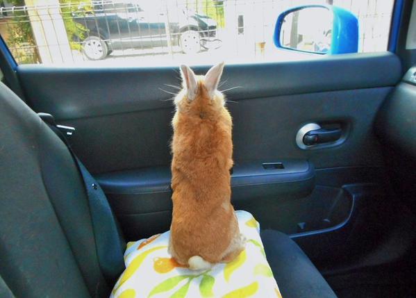 車の中から景色を見たかったけど、見えなかったウサギが可愛いw