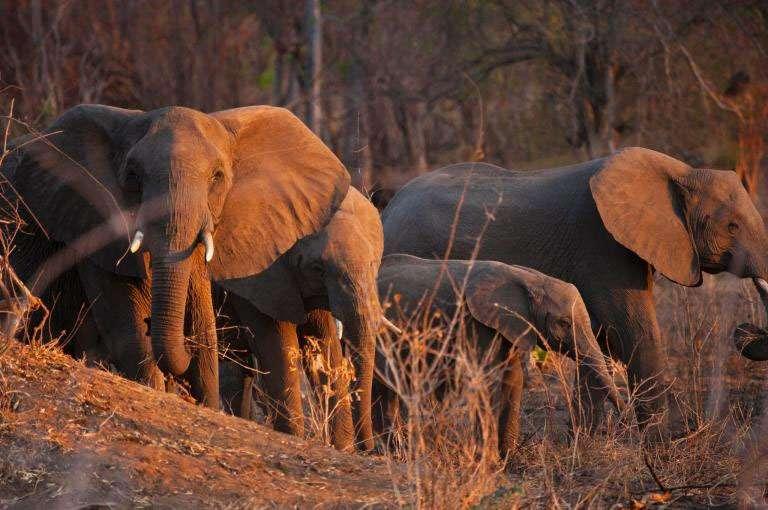 ゾウを殺してゾウを保護するという矛盾 | ナショナルジオグラフィック日本版サイト