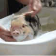 こう暑くっちゃよぅ。お風呂大好きな動物たちのきゅんかわバスタイム