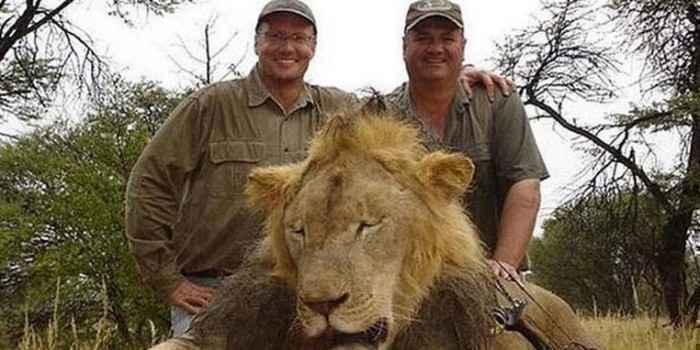 「同じ目に遭わせたい」ジンバブエの人気ライオンを射殺した米国人歯科医に批難が殺到、殺害予告まで - IRORIO(イロリオ)