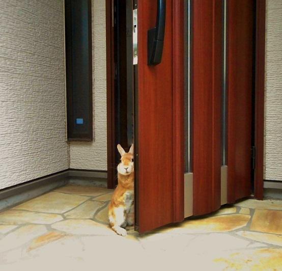 玄関までお見送りしてくれる史上最強にカワイイうさぎが見つかった!!