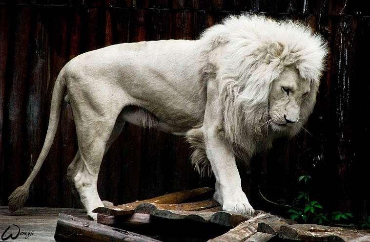 限りなく美しい動物の画像を貼るトピ