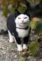 """画像 : """"フクロウみたいな子猫""""が可愛いすぎると海外で話題に - NAVER まとめ"""