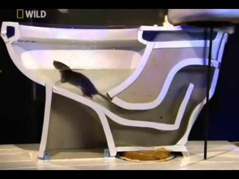 ネズミは動物界の忍者であることがよくわかる動画 - YouTube