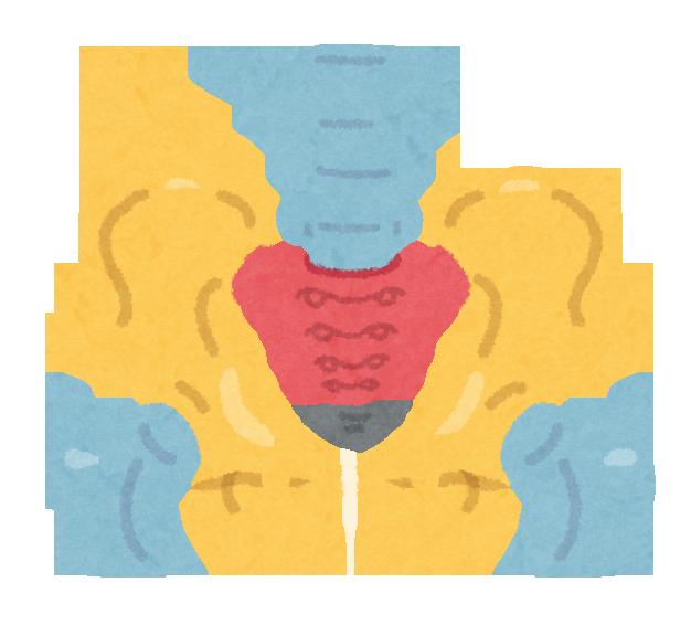 産後の骨盤矯正はどのようにしましたか?