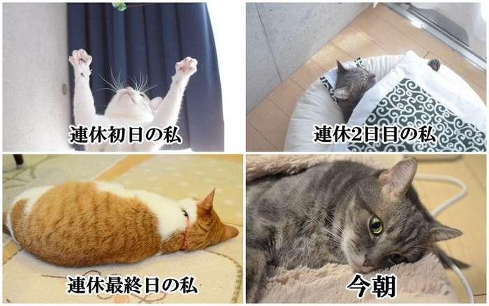 3連休が終わって絶望してる人も多いと思いますが、ここで連休中と連休明けの猫ちゃんの様子を見てみましょう