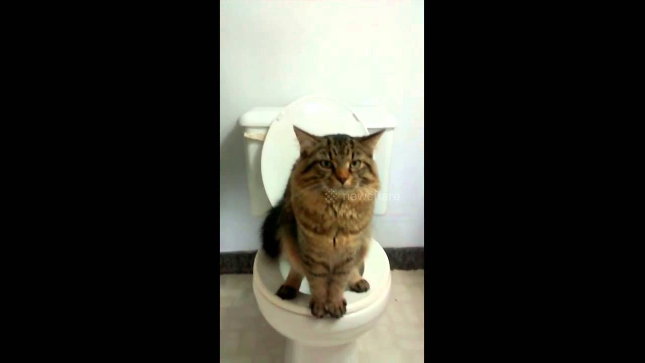 The cat that uses human toilets... while standing on two legs - YouTube