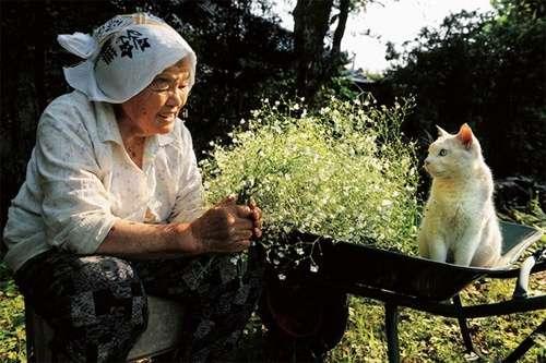 猫の本音「魚好きって決めつけるな」「蛇口で水飲ませて」「首輪の鈴は大迷惑」