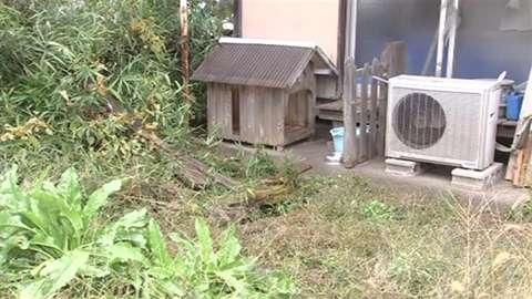 「バットで犬殴打の疑い 近所の男逮捕、吠える声に立腹」 News i - TBSの動画ニュースサイト