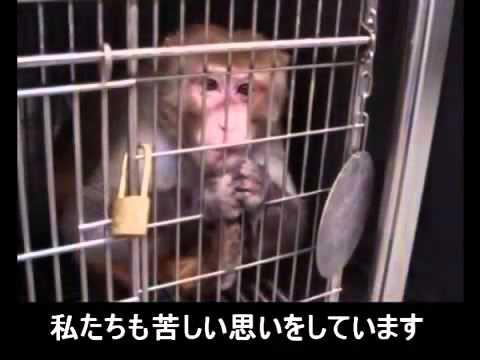 動物たちからのお願い - YouTube