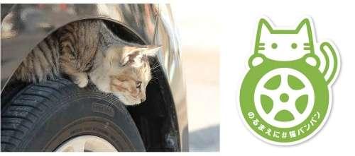 日産が猫バンバンの呼びかけ本格化 猫の事故を防ぐ「#猫バンバン プロジェクト」特設サイトを公開 - BIGLOBEニュース