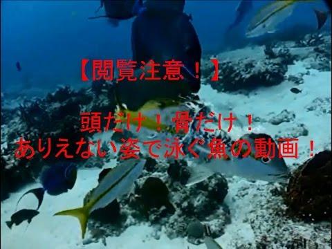【閲覧注意!】頭だけ!骨だけ!ありえない姿で泳ぐ魚の動画!!! - YouTube