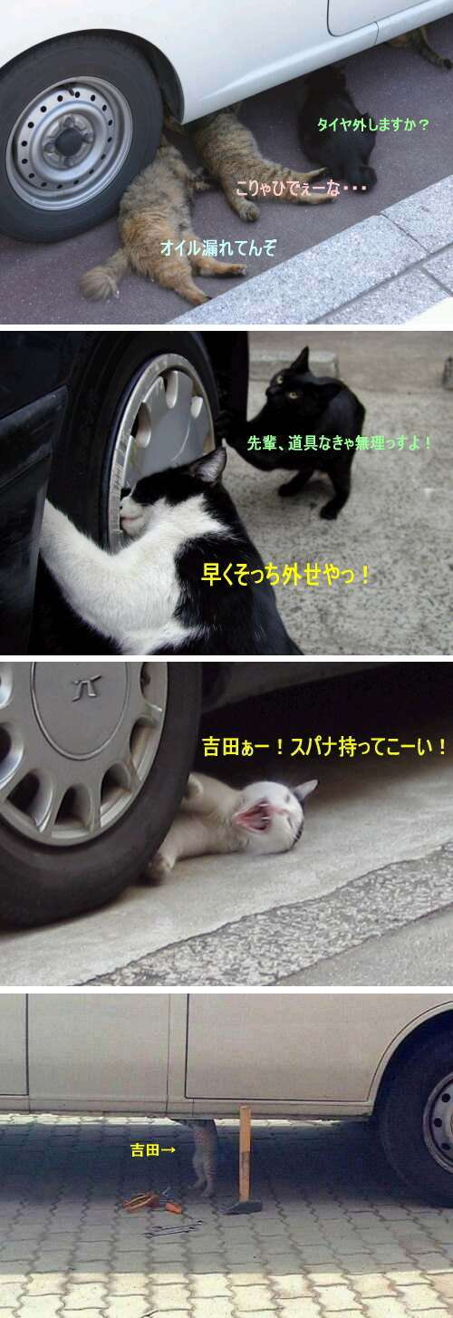 日産が猫バンバンの呼びかけ本格化!猫の事故を防ぐ「#猫バンバン プロジェクト」特設サイトを公開