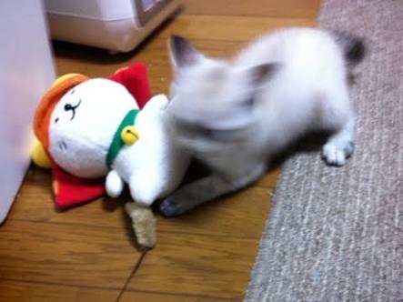 今年も猫好きさん!