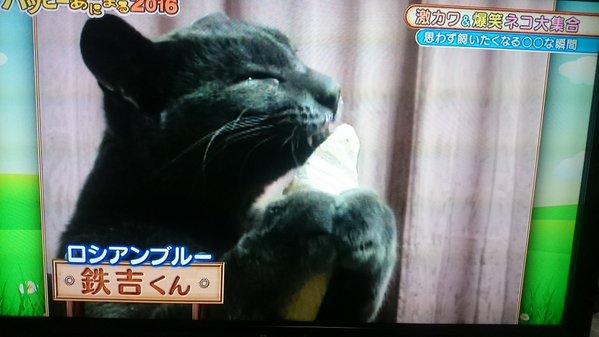 猫にチョコレートを食べさせる動画を放送 TBS番組にネットで批判