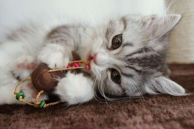 猫にチョコレートを食べさせる動画を放送 TBS番組にネットで批判 - ライブドアニュース