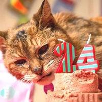 「世界最高齢の猫」長寿の秘訣はケンタのチキン? - NAVER まとめ