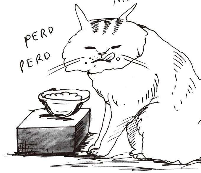 アイスクリームで中毒起こすことも 猫のNGフードとは? | ENTERTAINMENT | ananニュース