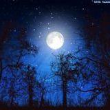 深夜だし、夜の神秘的な画像貼らない?