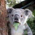 オーストラリアに行ったことある方