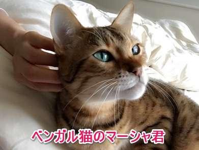 藤原紀香、自宅で悲劇 愛用ブーツすべてに猫のオシッコかけられ「全滅」