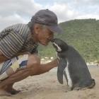 ペンギンの「ジンジン」毎年命の恩人に8,000kmも泳いで会いに来る | ANIMALive