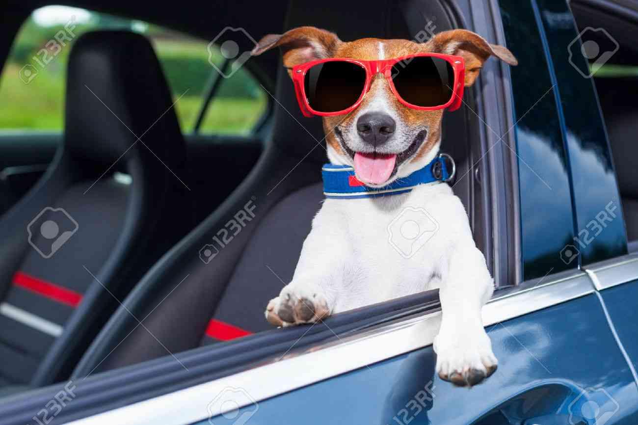車の運転をする時、サングラスしますか?