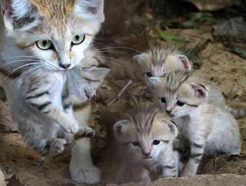 【画像】動物親子の画像を貼るトピ