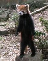 立ち上がった動物たちの画像トピ