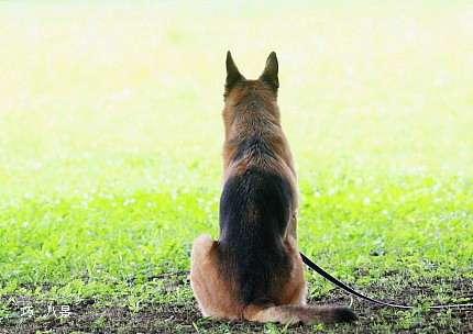 「自宅で飼っている他の犬と相性が悪かったので」…動物愛護団体から引き取った犬を遺棄