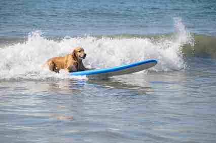 【画像】海を背景にした犬・猫の画像を下さい