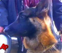 火事に巻き込まれた飼い主を助けるためにパトカーを誘導して火事現場まで案内したお手柄犬(アメリカ) : カラパイア