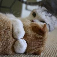 【随時追加】かわいい・動物GIF画像【萌える】 - NAVER まとめ